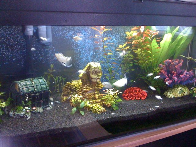 aquarium livediesel blog. Black Bedroom Furniture Sets. Home Design Ideas
